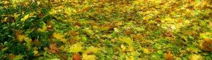 cropped-AutumnCarpet_120.jpg